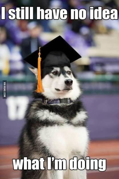husky-grad-cap